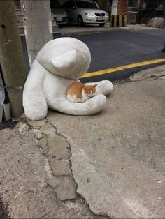 cat ♥This kind of makes me sad. Is the kitty a stray that needs a family or did it lose it's best friend...