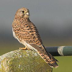 Beautiful Birds, Animals Beautiful, Kinds Of Birds, All Nature, Birdwatching, Birds Of Prey, Raptors, Wild Birds, Pet Birds