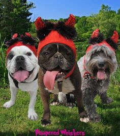 Little Devil costume hat for cats and dogs >>> You can get more details by clicking on the image. (This is an Amazon affiliate link)