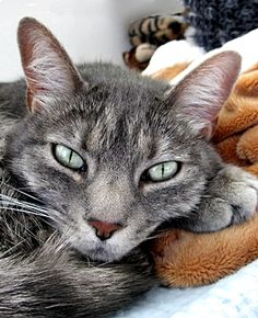 THE END OF CAT ALLERGIES? That future is closer than it has ever been before.  Read more at http://theanimalrescuesite.greatergood.com/clickToGive/ars/article/The-End-Of-Cat-Allergies447#5D1Ob2TsVi5vTx82.99
