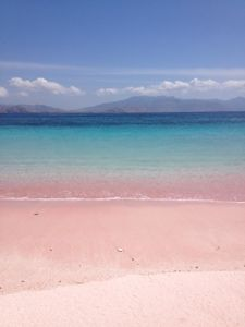 Pulau Komodo, Nusa Tenggara, Indonesia Komodo Island, Pink Beach, Need A Vacation, Beautiful World, To Go, Asia, Memories, Spaces, Explore