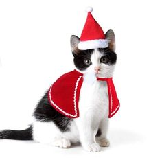 Adorable Cat Dog Costumes Cloak Cape Pet Clothes Shawl Scarf Outfit with Santa Santa Hat+Cloak. Adorable and festive Christmas Santa Claus cloak and hat, make your pet more attractive and charming. Made for Cats, Kitten, Puppies and Small Sized Dogs. Cat Dog Costume, Kitten Costumes, Costume Hats, Pet Costumes, Cat Christmas Costumes, Christmas Hat, Christmas Animals, Cat Santa Hat, Cats And Kittens