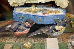 Morbid Anatomy: Seeking Walter Potter Artifacts and Ephemera!!!