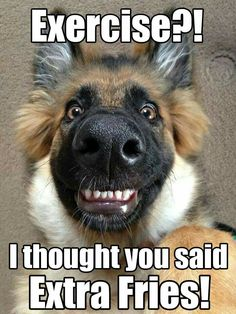 Funny Animal Pictures with Captions Source by lindyoh dog dog memes dog videos videos wallpaper dog memes dog quotes dogs dogs pictures dogs videos puppies puppy video Funny Animals With Captions, Funny Animal Jokes, Funny Dog Memes, Really Funny Memes, Cute Funny Animals, Funny Shit, Animal Captions, Funny Dog Pics, Pet Memes