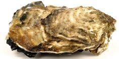 Hepar sulfur favorece las supuraciones http://www.homeopatia-online.com/hepar-sulfur/