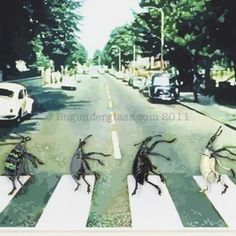 Ok, I need some of this bug art. Cool Insects, Bug Art, A Bug's Life, Insect Art, Abbey Road, Psychedelic Art, Art Portfolio, Science And Nature, Natural History