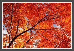 Beautiful fall colors, Mt Washington, NH