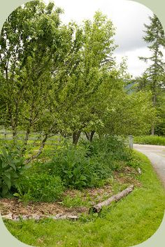 Food forest photo - fruit and nut trees with a guild of supportive plants planted around, beneath and between
