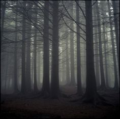 I firmly believe that if you listen closely trees will speak to you, and these trees seem to have a lot to say.