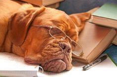 """Sören Emmzwoaka beschreibt in 25 satirischen Kurzgeschichten, was ein Leben mit Hund ausmacht. Buchrezension """"Aus dem Leben eines Rüden"""" auf dem Hundeblog."""