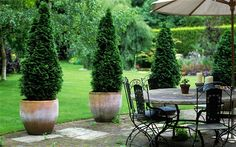 patio courtyard...love the potted trees