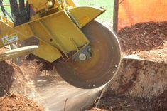 http://gatreecompany.com/   Tree Removal Service - Georgia Tree Company