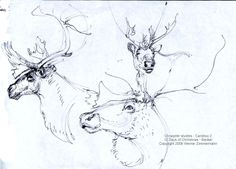 Caribou head profiles