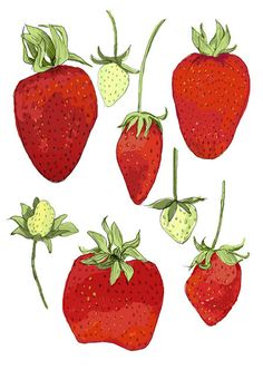 Strawberries -  6 greeting cards. via Etsy. by drenculture. Rigel Stuhmiller's Shop