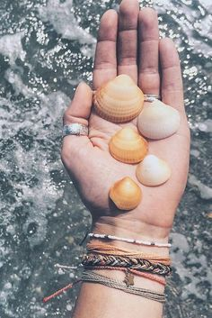 Seashells by the sea shore | Pura Vida Bracelets