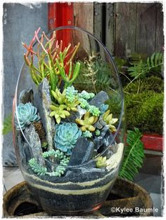Succulents and rocks in glass bowl.