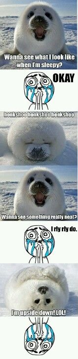 Silly baby seal...