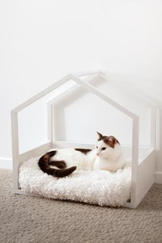 Cats have their own houses, just like we Humans do.