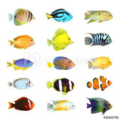 Great Collection Of A Tropical Fish On White Background