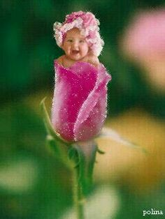 Anne Geddes in the spotlight, Pretty Baby Photos Anne Geddes, Gif Pictures, Baby Pictures, Baby Photos, Beautiful Gif, Beautiful Flowers, Flowers Nature, Pretty Baby, Pretty In Pink