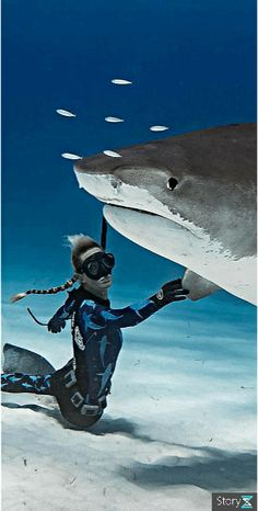 Diving - under sea - Diving - under sea - A diver and a shark