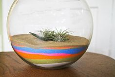 Use colorful sand to add a vibrant pop to your terrarium.