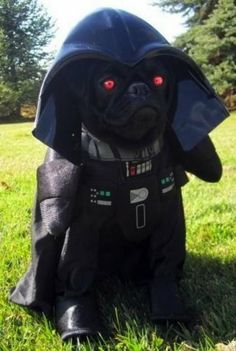 I am Bark Vader. Lord of the Bark side. LIKE me or you shall perish!  .