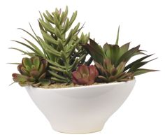Amazon.com - Artificial Mixed Succulents in Oval White Ceramic - Artificial Plants
