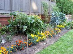 The veggie garden goes fall 2013!