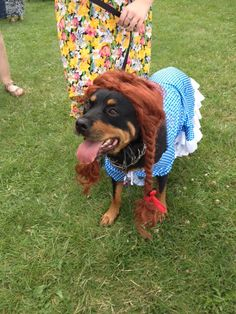 I don't think you're in Kansas anymore... just click your ruby slippers three times... problem solved! #doggyfashion #costume #rottweiler