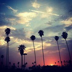 LA summer sunset #ilovela #palmtrees #losangeles