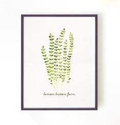 Buy 2 Get 1 Free Fern Print, Watercolor painting, Kitchen print, Botanical art, Apartment decor, Wall Decor - Lemon button fern #3 - 8x10. on Etsy, $22.00