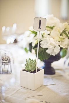 Simple succulent table numbers.