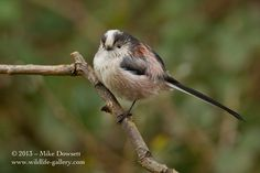 Photograph LTT by Mike Dowsett on 500px