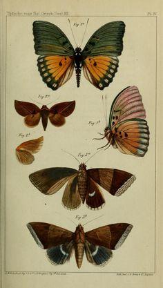 Vol 12 - Tijdschrift voor natuurlijke geschiedenis en physiologie. - Biodiversity Heritage Library