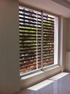 Ventana corrediza // sliding window