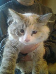 She has stopped growing! My little kitten<3