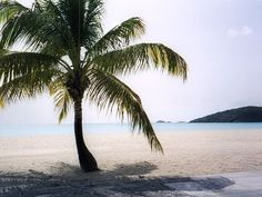 Jolly Beach Antigua, Caribbean - Been there and it is an amazing resort, great staff too <3