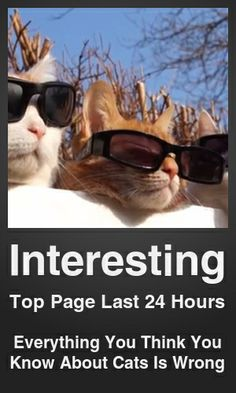 Top Interesting link on telezkope.com. With a score of 5921. --- Everything You Think You Know About Cats Is Wrong. --- #interesting --- Brought to you by telezkope.com - socially ranked goodness