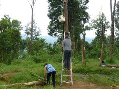 Putting up enrichments for the elephants Elephants, Laos, Elephant