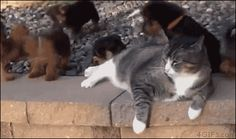 When puppies meet a cat -- the cat literally pushes the pup away with its hind leg