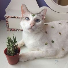 cats are good bois too Crazy Cat Lady, Crazy Cats, I Love Cats, Cool Cats, Animals And Pets, Cute Animals, Cat Dog, White Cats, Cute Creatures