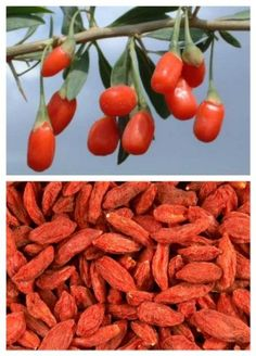 Go Organic with Goji Berries Healthy Recipe - Healthy Food Raw Diets Health And Nutrition, Health And Wellness, Healthy Fruits And Vegetables, Holistic Medicine, For Your Health, Superfoods, Body Care, Natural Remedies, Berries