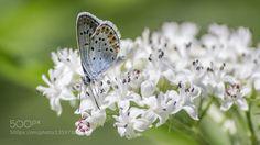 Butterfly by dushmank. @go4fotos