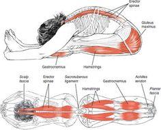 hamstring-seated forward bend