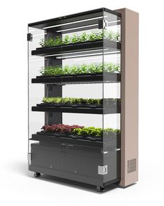 Farmshelf For Restaurants and Businesses Our smart hydroponic growing systems are both beautiful and functional They evoke a spaces commitment to design innovation and. Indoor Farming, Hydroponic Farming, Hydroponic Growing, Aquaponics Diy, Aquaponics System, Aquaponics Greenhouse, Hydroponic Store, Aeroponic System, Vertical Farming