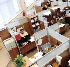 Artificial boxwood hedges better choices for your office cubicle interior over the real ones