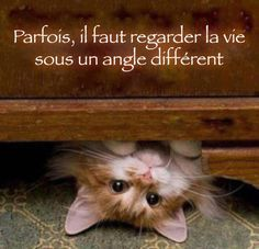 Positive cute quotes sayings perspective - Collection Of Inspiring Quotes, Sayings, Images I Love Cats, Cute Cats, Funny Cats, Funny Animals, Cute Animals, It's Funny, Funny Humor, Funny Cat Videos, Funny Cat Pictures