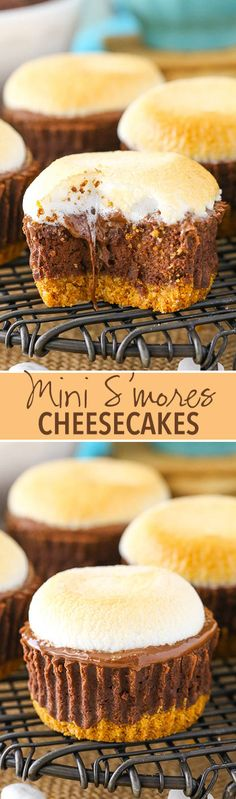 Mini S'mores Cheesecakes! Made with a graham cracker crust, chocolate filling, melted chocolate and toasted marshmallows on top!
