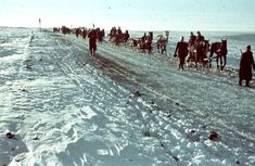 Carts with Hungarian soldiers moving on the road along a snow-covered field near the village of Ivanovka Khokholsky Voronezh region. Operation Barbarossa, Oriental, Defence Force, Budapest Hungary, World War Two, Wwii, Horses, Soldiers, Amazing
